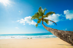 Tropical beach. Untouched tropical beach in Sri Lanka Stock Photography