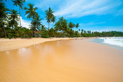 Tropical beach. In Mirissa bay, Sri Lanka Stock Photography