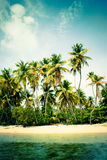 Tropical beach. Tropical scenery with palm trees Stock Photography