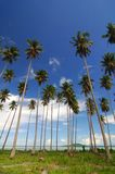 Tropical beach. With coconut trees Royalty Free Stock Photography