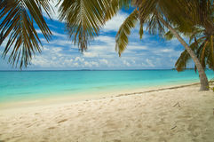 Tropical beach. With palm trees - Maldives Stock Photography