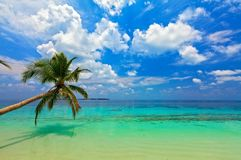 Tropical beach. On the island Vilamendhoo in the Indian Ocean, Maldives Stock Photo