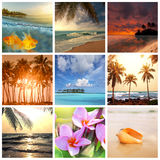 Tropical beach. Scenes colorful collage Stock Photos