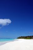 Tropical beach. On the maldives with white sand coconut palm tress and turquoise water Royalty Free Stock Photos