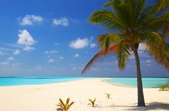 Tropical beach. On the island Kuredu in the Indian Ocean, Maldives Royalty Free Stock Images