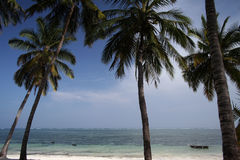 Tropical beach. Nice beach in Kenya - Africa royalty free stock image