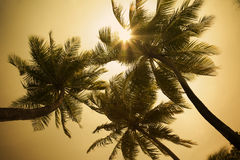 Tropical beach. Sunbeams through some palm trees Royalty Free Stock Images