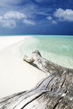 Tropical beach. Tree trunk left on the sand Stock Photography