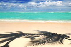 Tropical beach. Pristine tropical beach with palm trees shadows on Caribbean island. Colors are natural Stock Photography