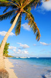 Tropical beach. Tropical sandy beach with palm trees and fishing boats Royalty Free Stock Image