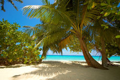 Tropical beach. Palms on the tropical beach stock photography