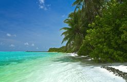 Tropical beach. Untouched tropical beach with coconut palm trees Stock Photography