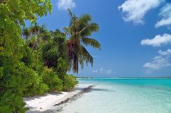 Tropical beach. Untouched tropical beach with coconut palm tree Royalty Free Stock Image