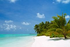 Tropical beach. Beautiful tropical beach with coconut palm trees Royalty Free Stock Images