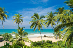 Tropical beach. Palms on the tropical beach Stock Image