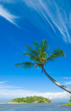 Tropical beach. Palm on the tropical beach Stock Images