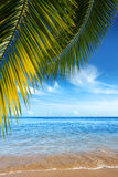 Tropical Beach. Beautiful tropical beach with clear ocean and palm trees Royalty Free Stock Photos