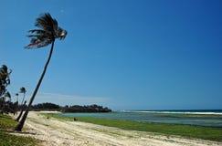 Tropical Beach. Beach near Dar-Es-Salaam, Tanzania Royalty Free Stock Images