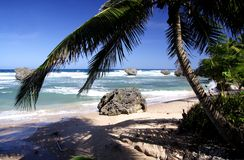 Tropical Beach. Beautiful caribbean beach Royalty Free Stock Photos