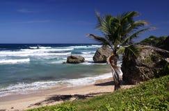 Tropical Beach. Beautiful caribbean beach Royalty Free Stock Photo