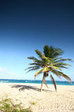 Tropical beach 7. Tropical beach in Barbados, with a single palm tree stock photography