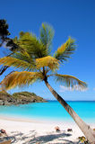 Tropical Beach. Palm Tree on Trpoical Beach Stock Image