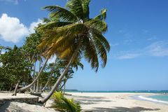 Tropical beach. In Puerto Plato in Dominican Republic Stock Photography