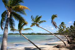 Tropical beach. Palm trees on a beach in the tropics royalty free stock photography