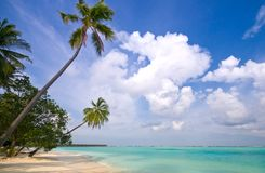 Tropical Beach. With coconut palm trees Stock Photography