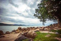 Tropical beach and alone tree near the blue ocean Stock Photos