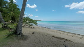 Tropical beach. Amazing natural beach in the dominican republic stock video