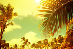 Tropical beach. Art Tropical beach vintage style Royalty Free Stock Image