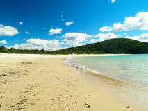 Tropical beach in Australia. A tropical beach in Australia with lot's of seagulls scavinging for food Stock Image