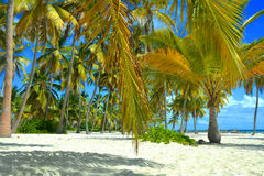 Tropical beach background Royalty Free Stock Images