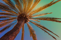 Tropical beach background with palm tree Stock Images