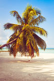 Tropical beach background with palm trees and sea.  Stock Images