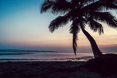 Tropical beach background at sunset sunrise. With coconut palm tree. black silhouette of palm trees branches against bright blue pink sky stock photo