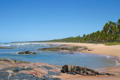 Tropical beach at Bahia, Brazil. Tropical beautiful beach, with coconut trees near Salvador, Bahia, Brazil Royalty Free Stock Image