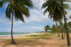 Tropical beach at Bahia, Brazil. A tropical beach at Bahia, near Salvador, with coconut tress and a small fishing boat on the sand Royalty Free Stock Photos