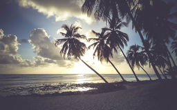 Tropical Beach in Barbados Stock Image