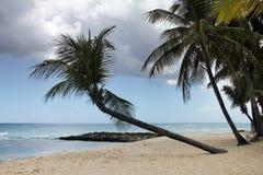 Tropical beach. Barbados. View of nice tropical beach with palm. Barbados Royalty Free Stock Photos