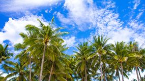 Tropical beach with beautiful palm trees and white Royalty Free Stock Photo