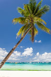 Tropical beach with beautiful palm Stock Photo