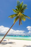 Tropical beach with beautiful palm and white sand Royalty Free Stock Image
