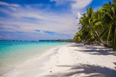 Tropical beach with beautiful palms and white Royalty Free Stock Image