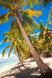 Tropical beach with beautiful palms and white sand Stock Photo