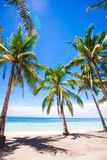 Tropical beach with beautiful palms and white Stock Photos