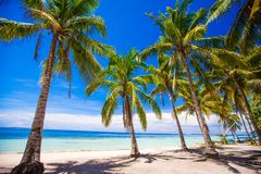 Tropical beach with beautiful palms and white Stock Image