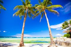 Tropical beach with beautiful palms and white sand Stock Image