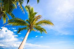 Tropical beach with beautiful palms and white sand Royalty Free Stock Image